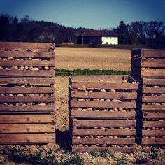 #potatoes #farming #linz #leonding #farm #linzpictures #landwirtschaft #bauer #kartoffel #yummy #lnz #igerslinz #umland #feld #pommes #growing #bio #nature #vegan #instamood