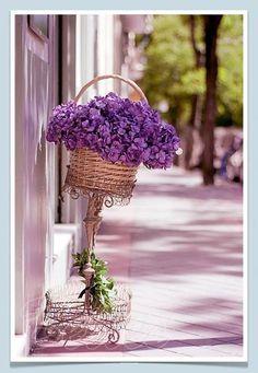 beautifull in purple Purple Lilac, Lavender Flowers, Beautiful Flowers, Lavender Cottage, Lavender Fields, Beautiful Flower Arrangements, Little Red Ridding Hood, All Things Purple, My Flower