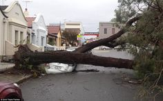 In Emily Street in Leichardt, a huge tree completely squashed a white car parked on the si...