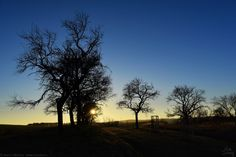 Silhouettes of sunset Sunset Silhouette, My Photos, Silhouettes, Celestial, Winter, Outdoor, Landscapes, Google, Self