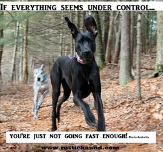 Motivation from Harbor - I just love the hounds @Rustic  Hound