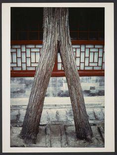 Michel Delaborde, Chine, (arbre) 1981-1982.  © Ministère de la culture (France), Médiathèque de l'architecture et du patrimoine, Diffusion RMN-GP
