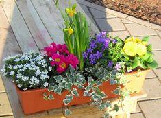Balcony box Spring - Balkon u Garten - Design Rattan Furniture Balcony Flowers, Balcony Plants, Window Boxes, Green Flowers, Garden Pots, Spring Time, Container Gardening, Garden Design, Modern Design