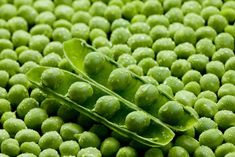 Are Peas Good For Dogs - http://pets-ok.com/are-peas-good-for-dogs-dogs-596.html