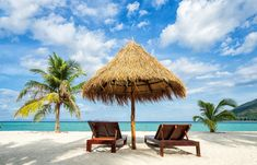 Vacation in tropical countries. Beach chairs, umbrella and palms on the beach in the Bahamas