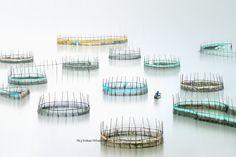 滩涂围网养殖 -