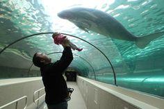 On the aquarium of Singapore