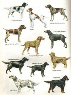 Various gun dogs