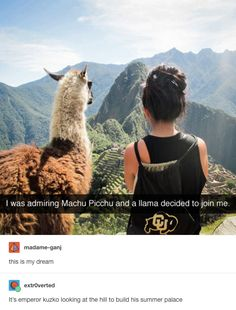 This llama in disguise: | 26 Jokes That Will Make Disney Fans Laugh Way Harder Than They Should