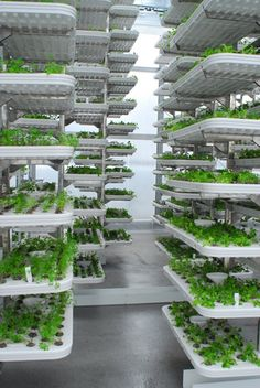 Vertical farming enables farms to occupy urban centres, producing up to 20 times more yield and uses of the water typically required for soil farming. The Farm, Vertical Garden Wall, Vertical Farming, Farming System, Aquaponics System, Urban Agriculture, Urban Farming, Hydroponic Gardening, Hydroponics