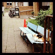 何か待ってる三毛猫。 - @blaue_fuchs- #webstagram