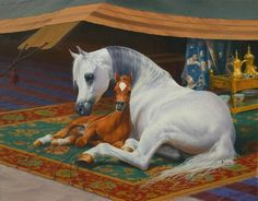 Welcome to Arabian Fine Art. Mare and foal laying down on fancy blanket. Horse Drawings, Animal Drawings, Standardbred Horse, Oil Pastel Colours, Beautiful Arabian Horses, Horse Artwork, Horse Paintings, Arabian Art, Painted Pony