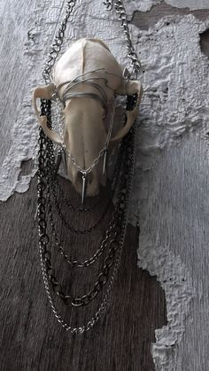Real Raccoon Skull Necklace taxidermy by CreationsByRavenJade