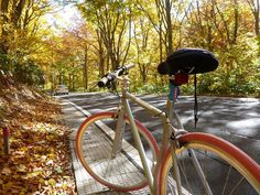 autumn cycling in japan // tokyo by bike page