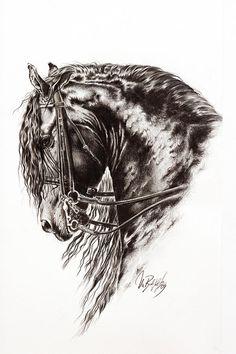 Friesian Horse Drawing