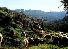 Bethlehem mountainside                                                                                                                                                                                 More