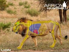 Grands gibiers africains - Le blog de Alex.bowhunter Africa Hunting, Bow Hunting, Impala, Moose Art, Elephant, Animals, Sports, Badger, Dog