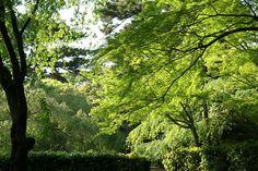 京都御苑 近衛邸跡付近 2009.04.29 /アンジュー フォトギャラリー