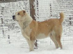 Zhan, Russia jr. heavyweight fighting champion 2012, 89 cm and 104 kg, son of legendary undefeted champion Topaz