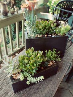Plant arrangement 5
