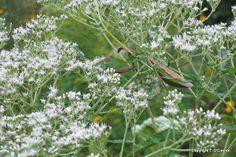 Native plants of North Carolina