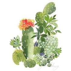 Cactus No. 3 Watercolor Art Print ❤ liked on Polyvore featuring home, home decor, wall art, cactus wall art, watercolor wall art and cactus home decor