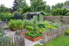 Country kitchen garden with nice corten steel garden beds, Wattle fence, garden shed.