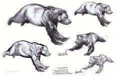 Art of Animation : suckmycockatoo: Fantastic reference for bears! ... ✤ || CHARACTER DESIGN REFERENCES | キャラクターデザイン •