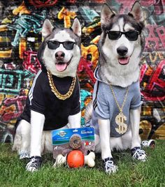 "401 Likes, 68 Comments - N͟͟I͟͟K͟͟A͟͟  K͟͟I͟͟R͟͟A͟͟ (@2husketeers) on Instagram: ""Kira & Nika, or should I say Dog Dolla Sign & Big Doggie D got some new duds complete with sneakers…"" #siberianhusky"