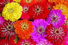Big, beautiful blooms - Grow Northwest