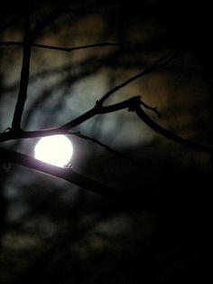 Luna Lovegood, Nocturne, Moon Shadow, Night Shadow, Midnight Garden, Dark Autumn, Beautiful Moon, Dark Night, Werewolf