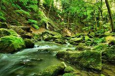 A legszebb erdők Magyarországon/Beautiful forests in Hungary Beautiful Forest, Tree Forest, Budapest, Vacation Spots, Hungary, Places To Visit, Marvel, River, Landscape