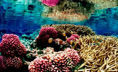 Ocean acidification could silence the fish and crustaceans that call coral reefs their home.