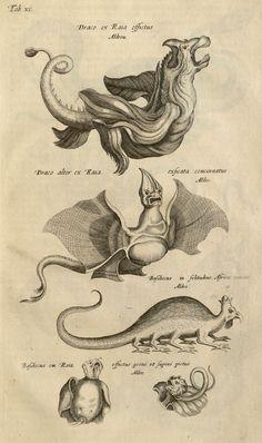 Dragons.  From: Historiae naturalis de quadrupedibus libri. Cum aeneis figuris (1657) by Joannes Jonstonus, plate.