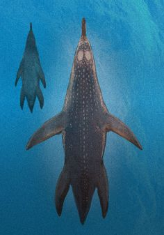 C.M. Kosemen - Two Polycotylus plesioaurs viewed from the top. New discoveries indicate that these prehistoric marine reptiles were quite chunky, more like seals and walruses than snakes or crocodiles.