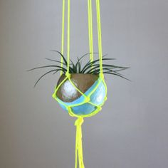 Macrame Air Plant Hanging Planter with Tillandsia in Pod Planter - Aqua, Gold Bronze, Neon Yellow.  Home Decor via Etsy