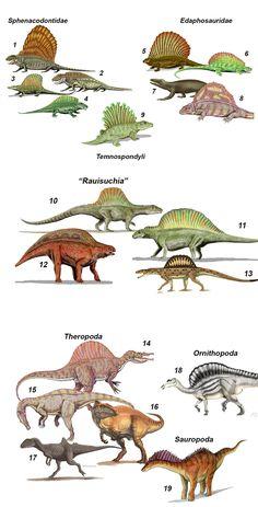 Sailback Roster -- Fig. 1. A brief survey of the sailbacks of prehistory. Permian sailbacks, the sphenacodontids: (1) Dimetrodon, (2) Sphenacodon, (3) Secodontosaurus, and (4) Ctenospondylus. The edaphosaurids: (5) Edaphosaurus, (6) Ianthasaurus, (7) Echinerpeton, (8) Lupeosaurus. The temnospondyl: (9) Platyhystrix. Triassic sailbacks, the rauisuchians: (1) Arizonasaurus, (2) Ctenosauriscus, (3) Lotosaurus, and (4) Xilousuchus. Cretaceous sailbacks, the theropods: Spinosaurus (1), Suchomimus…
