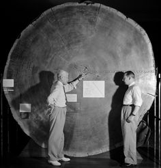 """""""""""To this day, Prometheus still holds the count for the most rings of any tree, at 4,862. The next oldest tree, called Methuselah, was identified by Edward Schulman in the 1950s and is still alive..."""