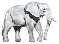 Wie malt man einen Elefanten - Anleitung-dekoking