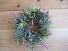 Bromeliad wreath