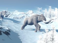 Mammoths walking slowly on the snowy mountain against the wind Canvas Art - Elena DuvernayStocktrek Images x Polar Climate, Snowy Mountains, Mammals, Photo Puzzle, Vivid Colors, Fine Art America, Moose Art, Digital Art, Poster Prints