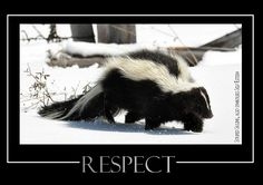 Respect - www.behind-the-scenes.co.za Motivational Posters, Panda Bear, Respect, Animals, Animales, Animaux, Panda, Animal, Animais
