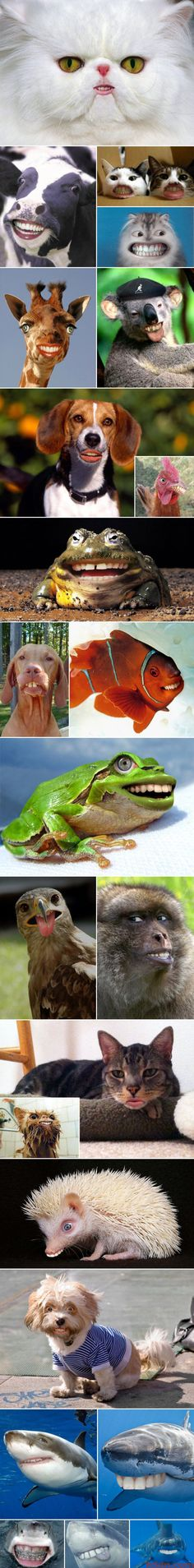 Animals with human mouths...I think some people have too much time on their hands