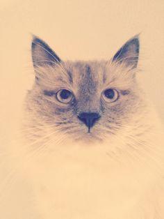 Cat, kitty, my love <3