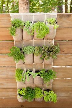 15 Unique and Beautiful Container Garden Ideas-Herb Garden-Hanging herb garden-small space gardening # container Gardening 15 Unique and Beautiful Container Garden Ideas - Sanctuary Home Decor Plantador Vertical, Vertical Planter, Vertical Gardens, Diy Vertical Garden, Shoe Storage Vertical Garden, Shoe Rack Garden, Garden Ladder, Diy Garden, Garden Crafts
