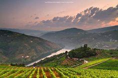 Douro... Portugal