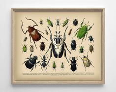 Vintage Insect Illustration 1 Unique College Dorm by StayGoldMedia