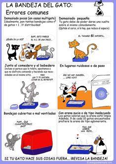 Compra una segunda caja de arena si tienes más de una gato. | 12 Infográficos prácticos que todo amante de los gatos necesita