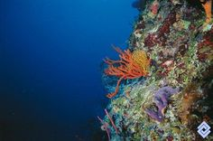 El Caribe colombiano está salpicado de islas, afloramientos y bajos que son colonizados por corales. La barrera arrecifal que se encuentra cerca de la isla de Providencia tiene una longitud de 20 km y es la segunda en extensión del Caribe.