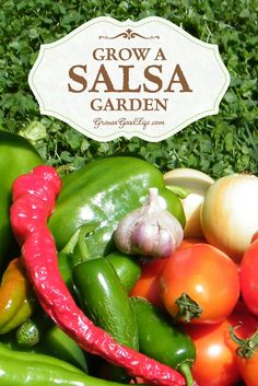 If you enjoy eating fresh salsa in the summer, growing a salsa garden will provide you with the fresh ingredients you need to whip up salsa at a moments notice. The basic ingredients that go into salsa are tomatoes, peppers, garlic, onions, and cilantro. See how you can plant all of these ingredients in a 4x4 foot raised bed or square foot garden.